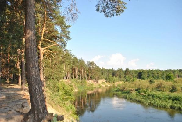 Серебрянный бор в Курске