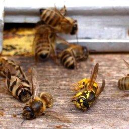 Виновные в массовой гибели пчел будут привлечены к административной ответственности